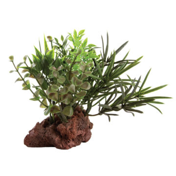 "Lava Base with Plant - 6""H"